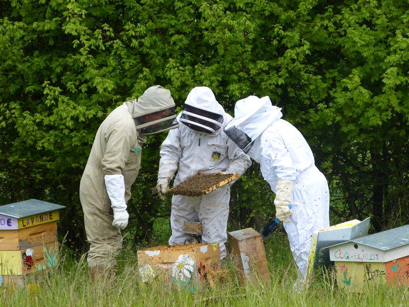 cadre plein d abeilles