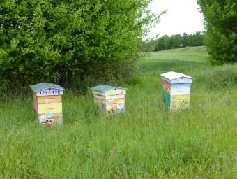 Miel récolte printemps 2017